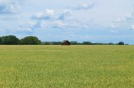 Old Barn Pea Field_3177